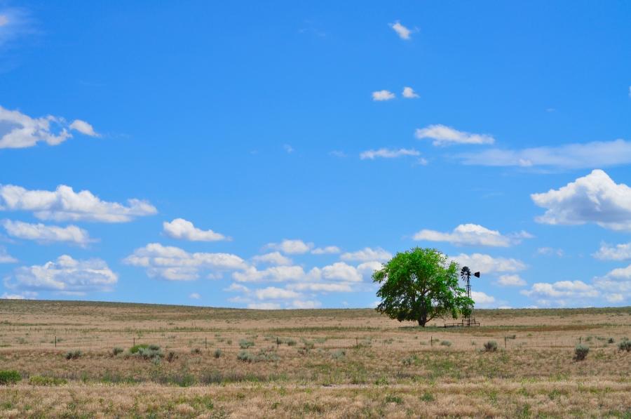 Tree & Windmill